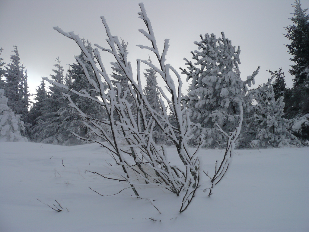 station de ski mont loz 232 re massif central